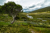 spencers creek (andrew.walker28) Tags: spencers creek kosciuszko national park new south wales australia alpine