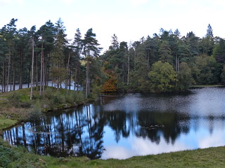 Tarn Hows Reflections.