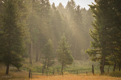 Montana Smoke (manypalms) Tags: montana whitefish smoke forest fire forestfire evergreens ranch