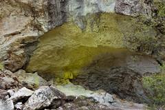 Yellow on the rock (Zack A.) Tags: waiotapu waikato newzealand nz