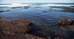 Everything Affects Everything (Caryn Sandoval) Tags: california tidepools tidepool nature ocean sea sealife sunset