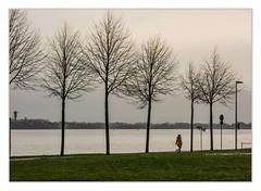 Beach promenade (bavare51) Tags: stralsund sundpromenade bäume hund mensch laterne grasfläche wasser strelasund