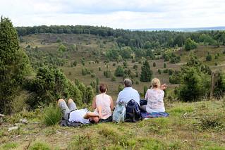 DSC_9889  Aussicht am Totengrund in der Lüneburger Heide - ca. 30 ha großer Talkessel, Bestand mit Heidekraut und Wacholderbüschen. Neben dem Wilseder Berg zählt der Totengrund zu den bekanntesten Landschaftsstellen der Lüneburger Heide.