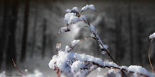L'hiver fait son spectacle