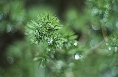 droplets tunnel (gnarlydog) Tags: waterdroplets closeup macro manualfocus vintagelens vintagelenseffect gzuiko40mmf14 speckledhighlights blurred shallowdepthoffield abstract plant nature green
