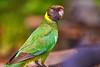 Curious twenty eight (Joshua Perera Photography) Tags: twenty eight wild bird national park nature wildlife sony a7r 100300mm zoom laea4 apo green blue pub