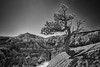Sun Shining on a Lone Tree (Joe_R) Tags: brycecanyonnationalpark zionnationalpark landscape tree bw nature bryce utah unitedstates us lonetree