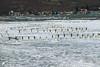 Pas grand monde sur les perchoirs de la réserve ! (jean-daniel david) Tags: hiver blanc gel glace nature yverdonlesbains suisse suisseromande switzerland lac lacdeneuchâtel bois perchoir froid réservenaturelle