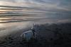 Looking out (joshhansenmillenium) Tags: saltair salt lake city utah great mountains clouds travel water reflections nikon d5500 nikond5500 tamron 18200mm wildlife adobe