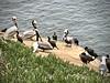 Cross-cultural communication (kimbar/Thanks for 3 million views!) Tags: pelicans cormorants seagull lajolla california pacificocean ocean birds shore