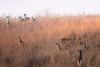 YardAfterYard (jmishefske) Tags: wehr wildlife january doe nikon whitetail deer nature d500 wisconsin center whitnall milwaukee 2018 franklin park
