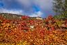 Rojo otoño (SantiMB.Photos) Tags: 2blog 2tumblr 2ig enredadera climbingplant cielo sky nubes clouds geo:lat=4278380586 geo:lon=212144200 geotagged baquedano navarra españa esp
