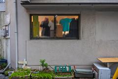 welcome to SAYA🌞SAYA (m-louis) Tags: 6713mm j5 nikon1 rsg abiko cloth house japan osaka plant sumiyoshiku wall window 住吉区 壁 大阪 家 我孫子 服 窓