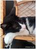IMG_20170517_161426 (claverinza) Tags: gatos cat mascotas felinos mininos animales
