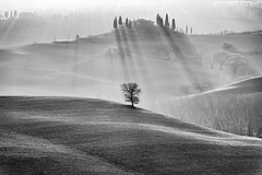 carry on (*magma*) Tags: valdorcia toscana tuscany italy country hills colline valley trees albero tree grass erba campi fields sunset tramonto solitary solitario cielo sky controluce backlight