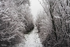 To Wonderland (Setsukoh) Tags: winter hiver snow neige blanc white weiss schnee wonderland wunderland arbre tree hedge haie passage sentier path chemin route road pathway nature way france frankreich lorraine lothringen grandest canon400d season saison silence