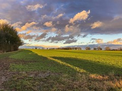 Sweeping rays (Just landscapes) Tags: color colour golden england uk clouds cloud farm farmland rural scenery scenic outside countryside fields dusk sunset lowsun evening sun sunrays paysage essex landscape iphone7 iphone