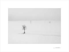 El horizonte habitado (E. Pardo) Tags: winter invierno schnee nieve snow árboles trees bäume horizonte habitado formas formen forms niebla nebel fog steiermark austria