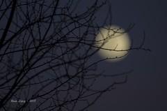 enmarañada (_DSC0461) (Rodo López) Tags: moon sacredmoon liuna lunallena superluna elbierzo españa excapture explore nigthphotografy night nikon nikoistas naturebynikon