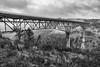 DSCF5915-2049.jpg (RHMImages) Tags: xt2 16mm foresthillbridge landscape bridge bnw fuji monochrome fog bw blackandwhite auburn fujifilm