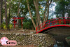Kitain (Seruru) Tags: japon japan kawagoe kitain templo temple puente bridge toori red rojo bosque forest arboles trees rio river 日本 神社 川 橋 川越 赤 森 木