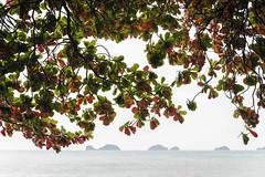 Thailand. Passe-partout (Rainbow 4A) Tags: nikon d810 240700 mm f28 ko samui thailand