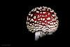 Fliegenpilz - Low-Key (Susanne Weber) Tags: pilz mushroom natur rot makro macro fliegenpilz schwarz wald waldboden