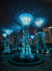 glowing trees (cih94) Tags: singapore garden city green nature plants gardens by bay project glass water artifical palm trees sky walk glowing lighshow