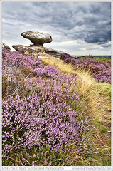 Mushroom Rock and Heather on Brimham Moor (© Mark Sunderland www.marksunderland.com) Tags: areaofoutstandingnaturalbeauty brimhammoor brimhamrocks britain britishisles clouds cloudy country countryside darkclouds darksky england europe flower flowering flowers gb greatbritain greyclouds greysky gritstone hardsandstone heather heathermoorland inbloom landscape millstonegrit moor moorland mushroomrock nature nidderdaleaonb overcast plants rock rockformation rocks sandstone stone summer summerbridge travel uk unitedkingdom upland wildflowers yorkshire yorkshiredales