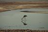 Salar de Atacama (Ana Claudia Lubitz) Tags: salar salardeatacama atacama atacamadesert sanpedrodeatacama flamingos flamingo lagoon lake nature natureporn