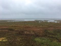 Dixon_JB_483_2097 (Joanne Bouknight) Tags: dixonwaterfowlrefuge illinois mist morning observationtower rain storm thewetlandsinstitute