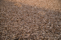 covered by dead leaves (kasa51) Tags: field deadleaves winter brown tokyo japan 冬 枯れ葉 野 cherrytree