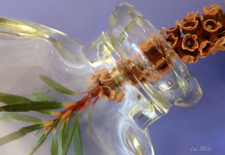 Bottlebrush IN a BOTTLE.....Macro Mondays