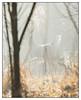 Morning Fog - Making the Retreat (GAPHIKER) Tags: deer woods sun bokeh fog dreamy mood
