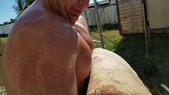BICEP CURL 115 X 13 4K (MOOSE COLLECTOR) Tags: workout weightlifting fitness bodybuilding back muscle legs lats pecs hamstrings traps quads arms shoulders chest triceps