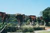 _MG_9507 (waychen_C) Tags: miaoli sanyi sanyitownship railway ruin bridge longtengbridge oldmountainline 苗栗 三義 三義鄉 龍騰斷橋 魚藤坪橋 魚藤坪斷橋 舊山線 yutengpingbridge