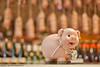 _DSC0977L_v1 (Pascal Rey Photographies) Tags: cochon pig charcuterie pascalreyphotographies pascalrey photos photographiecontemporaine photographie photography photograffik photographieurbaine photographienumérique photographiedigitale aruba abw boutique magasin nikon luminar skylum toys