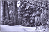 Icy sun (StarRider1300) Tags: freezingrain ice icy weather flashfreeze tree bw blackandwhite toned outdoor winter