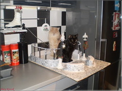 Christmas helpers :-D (Mary (Mária)) Tags: cat catlover love home decoration christmas 2017 iceskatingrink winter kitchen cocacola furry snow handmade marykorcek family doll project 16 diorama barbie
