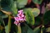 ILCE-7M2-09949-20180116-1239 // Vivitar MC Close Focus Wide Angle 28mm 1:2 (Otattemita) Tags: 28mmf20 florafauna vivitar vivitarkomine vivitarmcclosefocuswideangle28mmf20 fauna flora flower nature plant wildlife vivitarmcclosefocuswideangle28mm12 sony sonyilce7m2 ilce7m2 28mm cnaturalbnatural ota