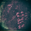 another image with ripe grapes... (elle Q1) Tags: digital original image post processed topaz ripe grapes purple green dark blue distressed texture vintage nostalgic analog appearance leaves outdoors grapevine llester images photo art
