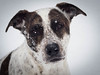 3/52 pretty rylee in the snow (d2roberts) Tags: 352 52weeksfordogs rylee snow dog heinz57dog mutt rescue