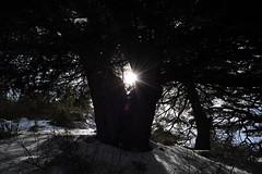 (Marwanhaddad) Tags: light sun lebanon flare snow cedars forest