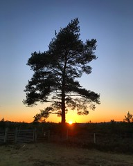 Tree At Sunset (Marc Sayce) Tags: tree sunset sundown woolmer ranges forest conford longmoor south downs national park hampshire winter february 2018
