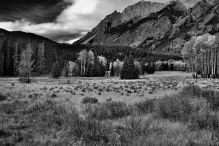 Yellows, Greens and Some Reds with a Mountain Backdrop (Black & White, Banff National Park)