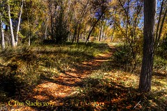 COTTONWOOD PATH (MERLIN08, 3MViews) Tags: usa colorado lakewood bearcreekpark forest fallcolor pathway outdoors