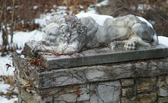 The Lion In Winter (humbletree) Tags: ohlbrich gardens madisonwisconsin lion winter a7rii