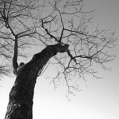 Warped Tree by Barry Pierce (blavon2290) Tags: tree sky black white hdr bw blackwhite contrast wood rebelxti eos400d canon