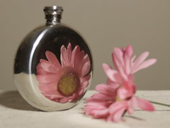 Reflection (N.the.Kudzu) Tags: home tabletop stilllife flask flower reflection canon70d lensbabyedge50