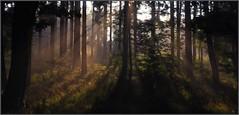 DER EINE.... (Explore 26.1.18 - auf Platz 43) (Uli He - Fotofee) Tags: ulrike ulrikehe uli ulihe ulrikehergert hergert nikon nikond90 fotofee licht bäume zwischenräume probleme dichtandicht